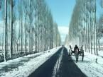 Srinagar to Pahalgam (Day Trip) 186 Kms